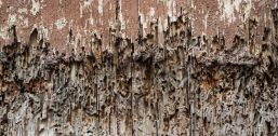 Timber Decay