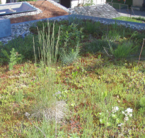 Polyprufe Green Roof Technology